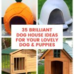 Brilliant Dog House Ideas for Your Lovely Dog Puppies