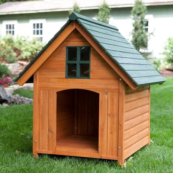 dog house shelter