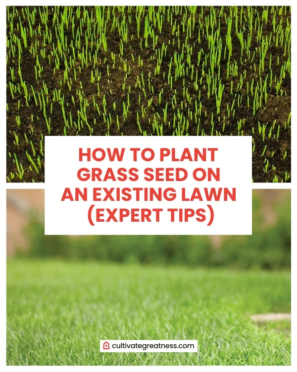 How to Plant Grass Seed on an Existing Lawn