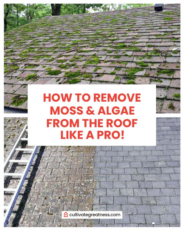 How to Remove Moss from the Roof Like A Professional