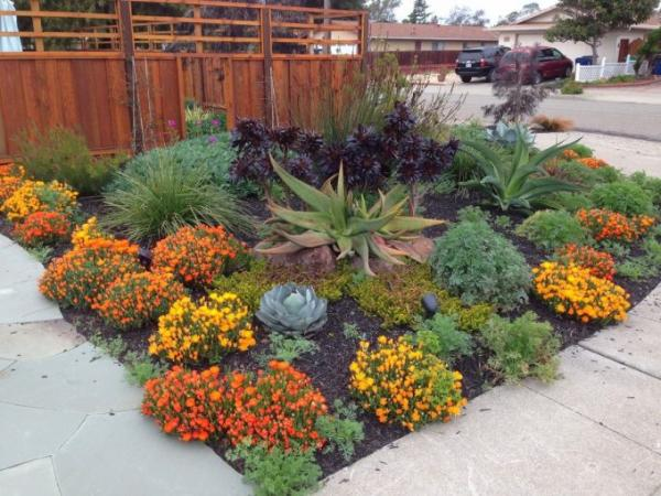 drought landscaping ideas for front yard