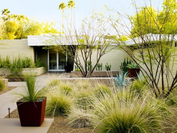drought landscaping ideas