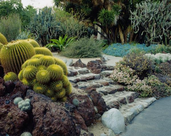 drought resistant front yard landscaping ideas