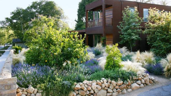 drought tolerant plants landscaping ideas