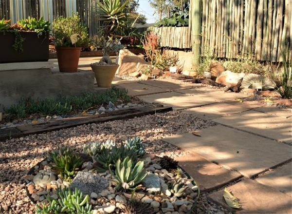 inexpensive drought tolerant landscaping ideas