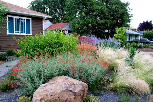 water drought landscape ideas